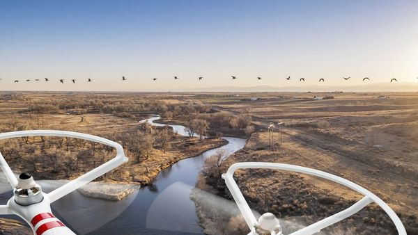 drone-country-geese-shutterstock262206680-crop-600x338